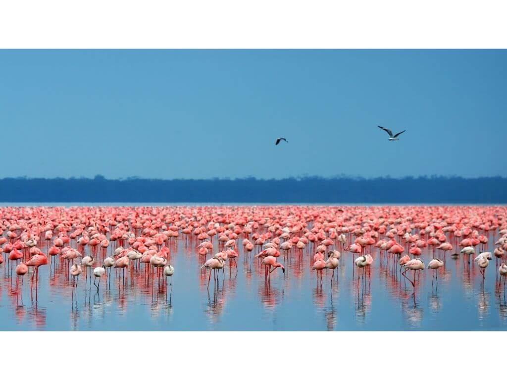 FLAMENCOS-PARAISO-NATURALEZA-KENIA