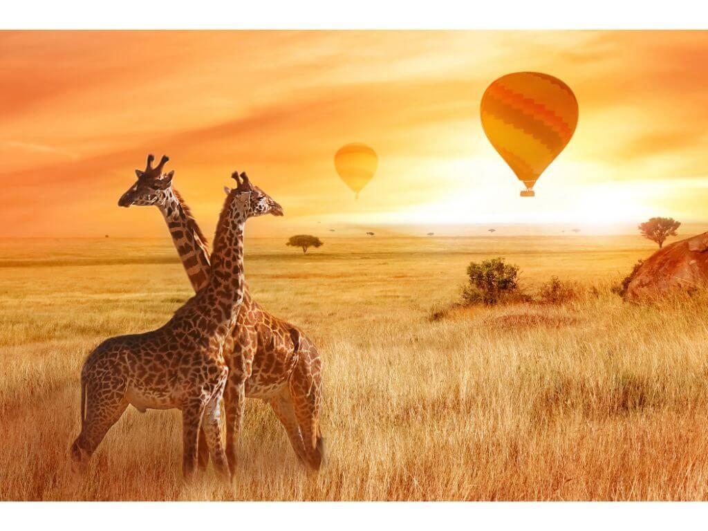 JIRAFAS-ATARDECER-PASEO-GLOBO-KENIA