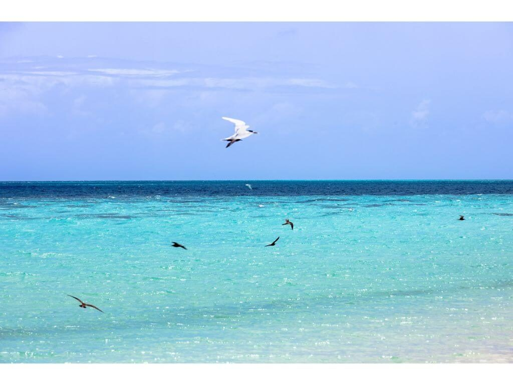 aves-barrera-coral-cairns-australia