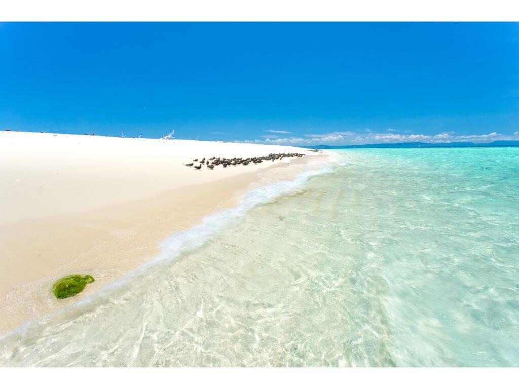 barrera-coral-cairns-australia