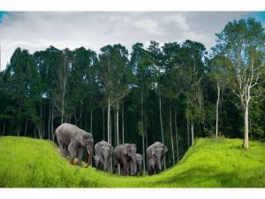 elefantes-playa-koh-chang-tailandia