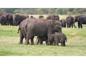 familia-elefantes-2-parque-nacional-minneriya-sri-lanka.jpg