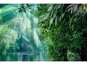 parque-nacional-tortuguero-2-costa rica