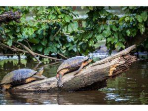 parque-nacional-tortuguero-costa rica