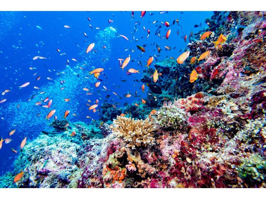 peces-submarinismo-islas-maldivas-maldives