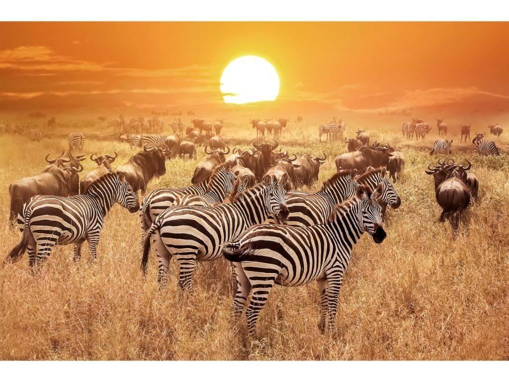 portada-cebras-kenia-3